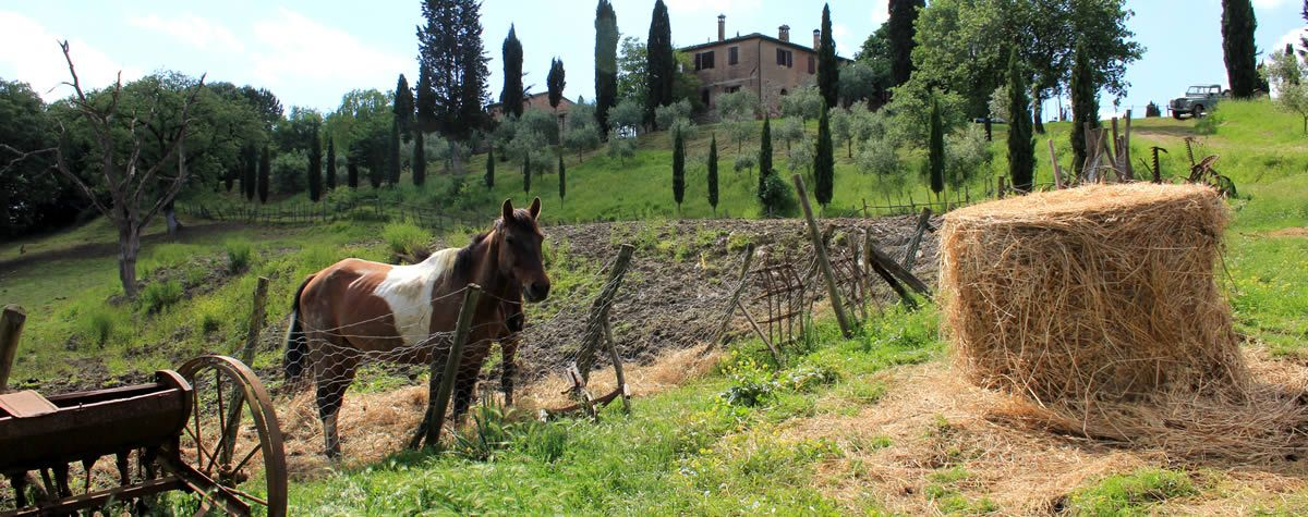 Agriturismo Val d'Orcia near Siena to go horseback riding for kids